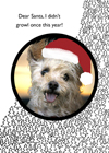 christmas dog holiday greeting card