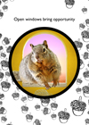 funny congratulations greeting  squirrel